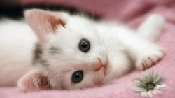 Atasi Stress dan Lelah dengan Terapi Kucing