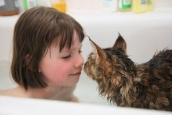 Wah, Ternyata Pelihara Kucing Punya Manfaat bagi Kesehatan!