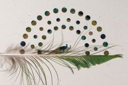 Keren, Seorang Seniman Amerika Mengubah Bulu Burung Jadi Karya Menakjubkan!