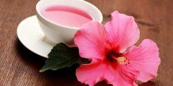 Manfaat Minum Teh Bunga Sepatu