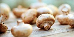 Manfaat Sehat Rutin Makan Jamur