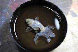 Hanya Lukisan, Ikan Ini Terlihat Nyata!