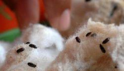 Wah! Inilah 5 Khasiat Semut Jepang bagi Kesehatan
