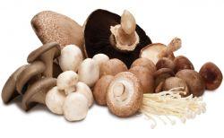 Manfaat Mengkonsumsi Jamur untuk Kesehatan