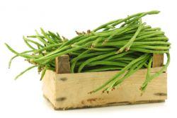 Khasiat dan Manfaat Kacang Panjang bagi Kesehatan Tubuh