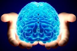 Kenali 5 Fakta Otak Kita!