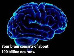 9 Fakta Menarik Mengenai Otak Manusia