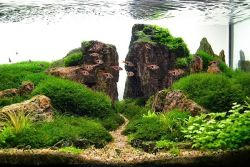 Indahnya Seni Berkebun dalam Air, Aquascape