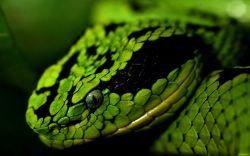 Slithering, Slinking Serpent