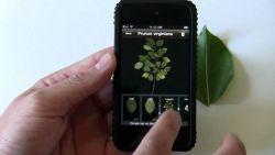 Leafsnap, Aplikasi Mengenal Tumbuhan
