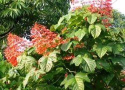 Manfaat Sehat dari Tanaman Bunga Pagoda