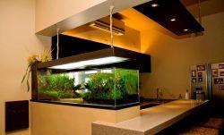 Manfaat Sehat Dibalik Memiliki Akuarium di Rumah