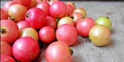 6 Manfaat Sehat dari Buah Kersen
