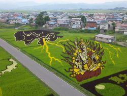 Kenali Tanbo, Seni Menghias Sawah di Jepang!