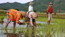 Info Beasiswa Pertanian Searca 2016 di Universitas Asia Tenggara! Mau?