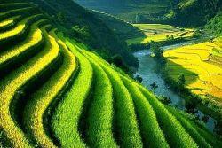 Subak, Sistem Irigasi Menggambarkan Keserasian Petani dengan Alam