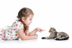 Ingin Terbebas dari Serangan Jantung? Cobalah Memelihara Kucing