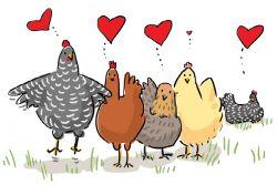 Ada Lagu Anak dari Suara Ayam! Yuk Dengar dan Nyanyikan Lagunya Ini!