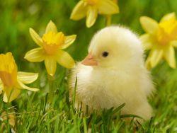 Yuk Nyanyi Bersama Lagu Anak Bebek Bebekku!