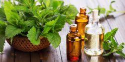 Manfaat Minyak Peppermint bagi Kesehatan Tubuh