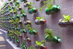 Cara Membuat Kebun Vertikal dari Botol Bekas
