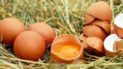 Benarkah Telur Busuk Bisa Membuat Kebutaan?